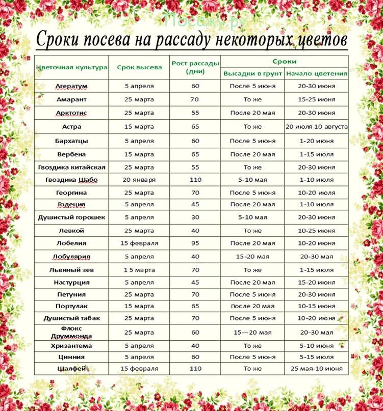 Лунный календарь посева семян огурцов на 2017 год 69