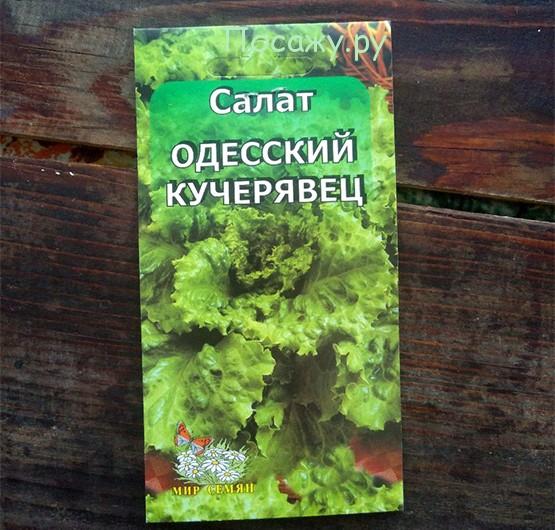 Салат кучерявец одесский выращивание на подоконнике