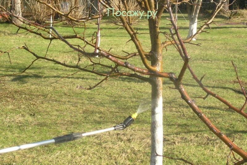 опрыскивать деревья