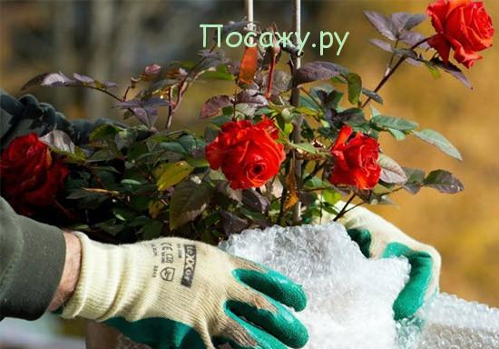 Чем укрывать розы на зиму в подмосковье