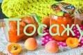 варенье из абрикос дольками янтарное