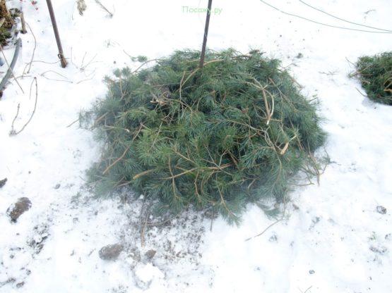 защита корней