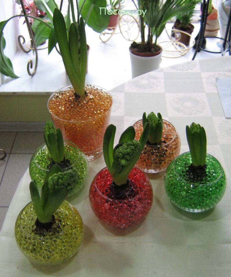 тюльпаны в гидрогеле