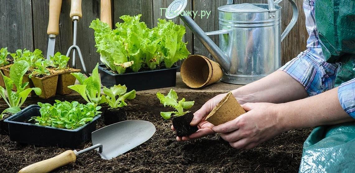 работа с растениями