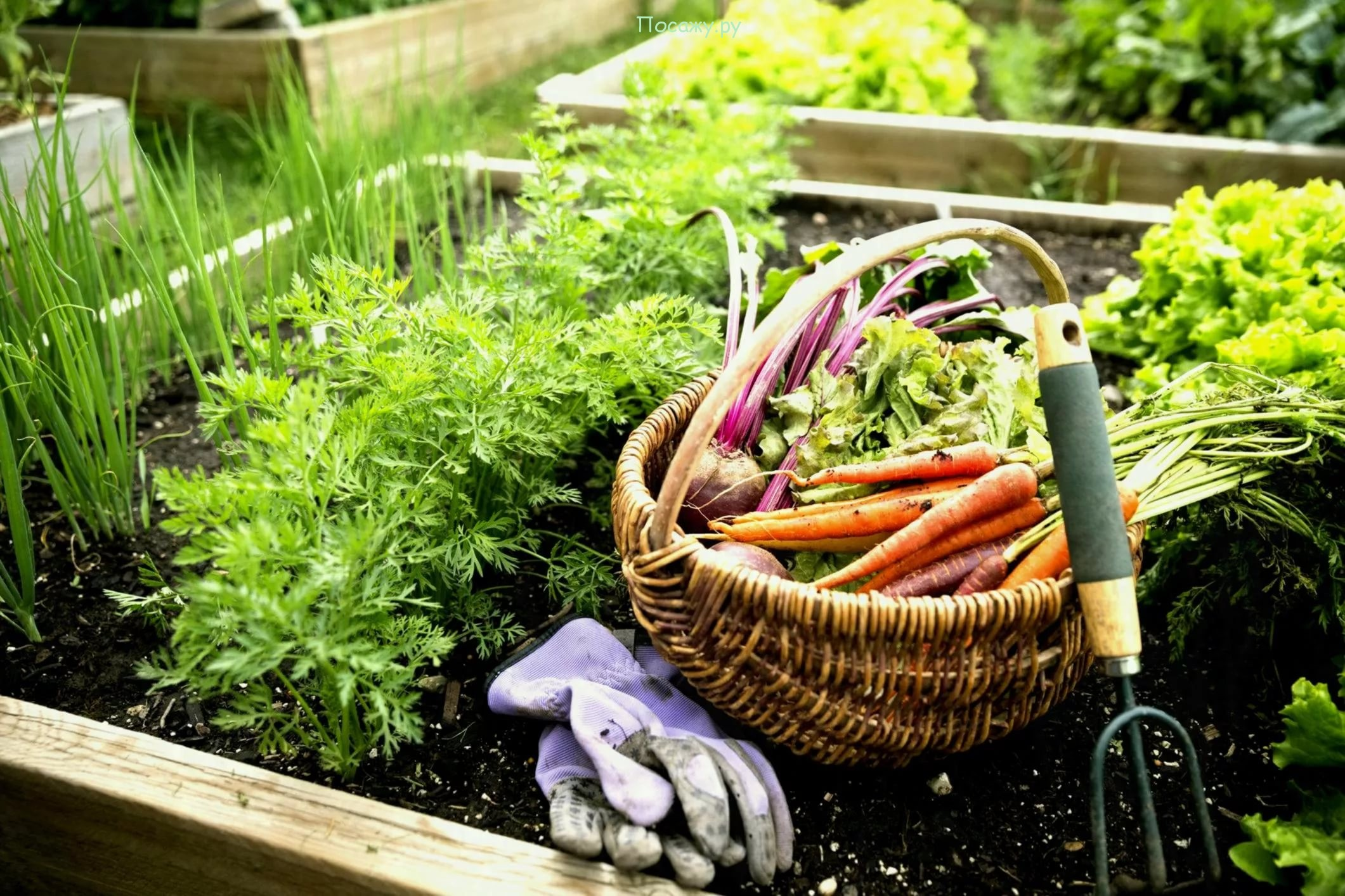 картинки клумбы сад и огородника супа