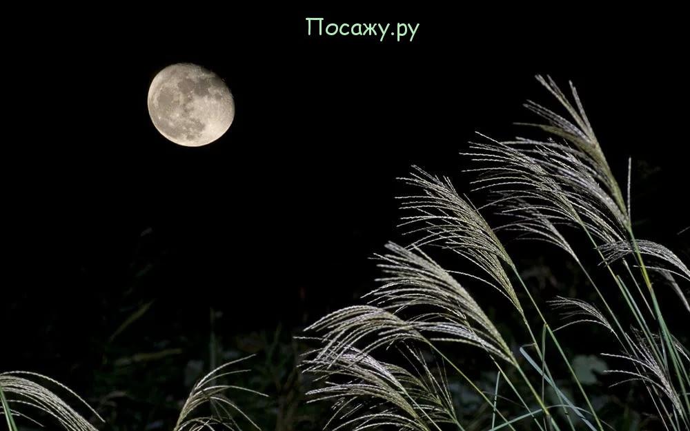 Луна на небе