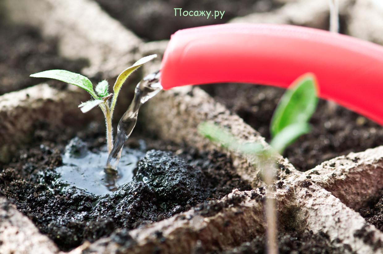 уход за рассадой
