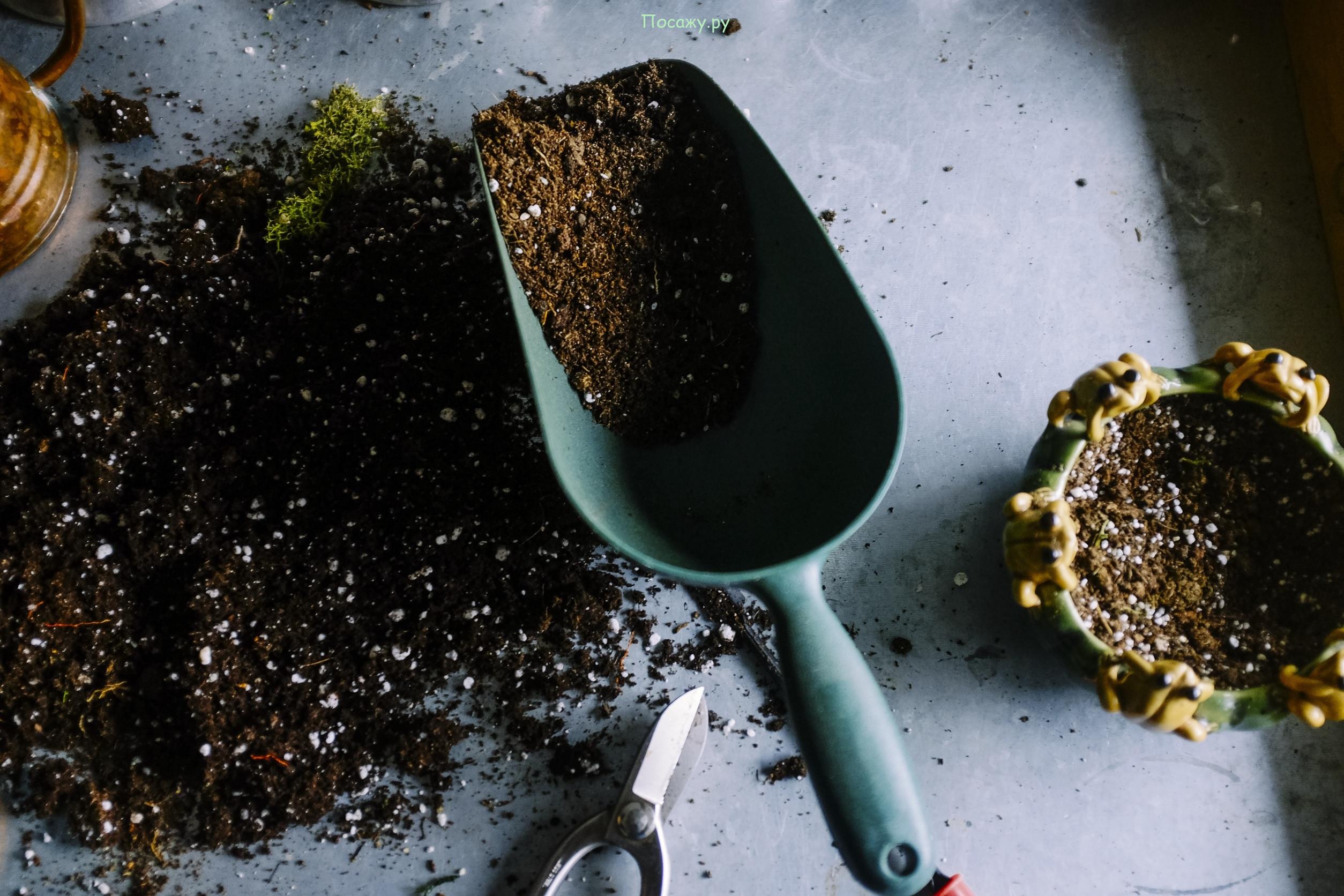 подготовка почвы для посева семян
