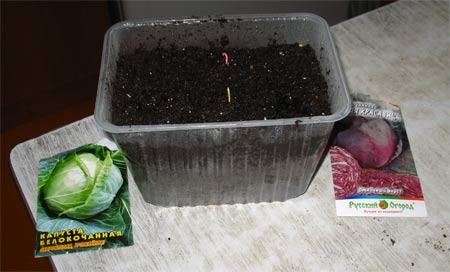почва для всходов капусты