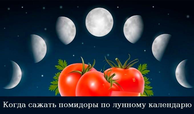 календарь посадки помидор