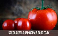 когда сеять помидоры