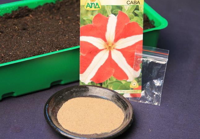семена петунии и песок