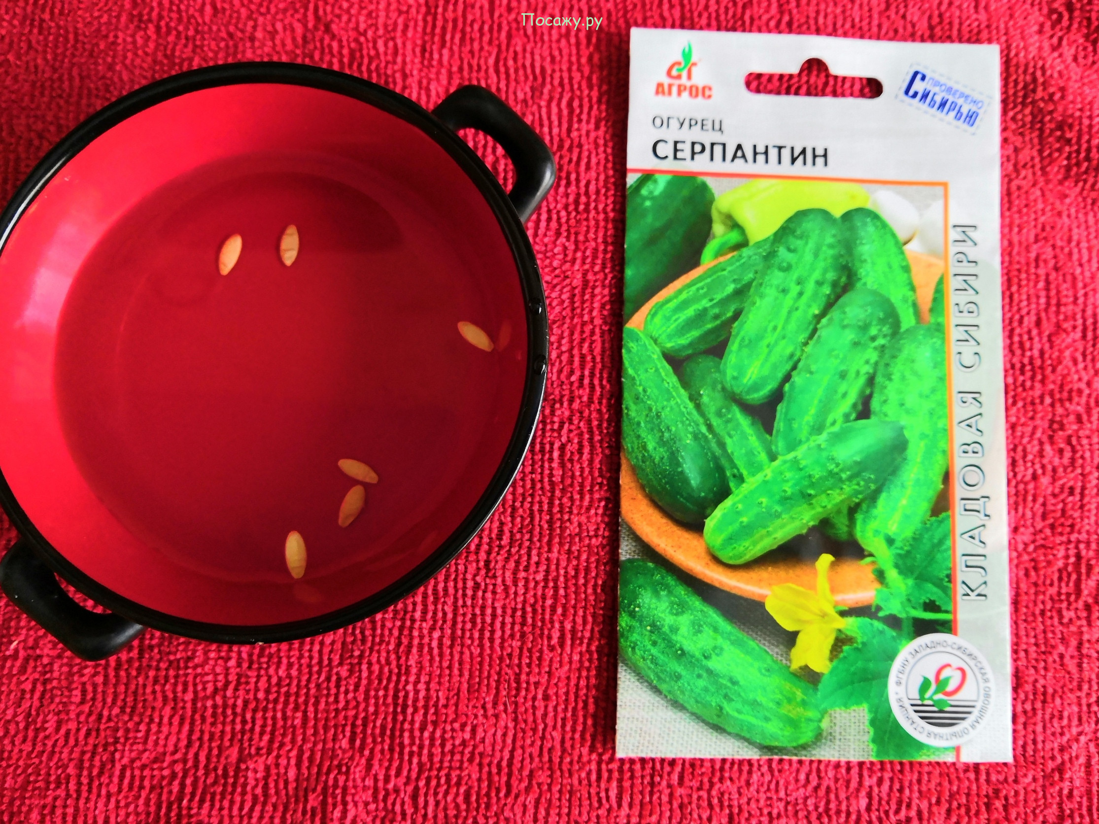 Как сеять огурцы серпантин