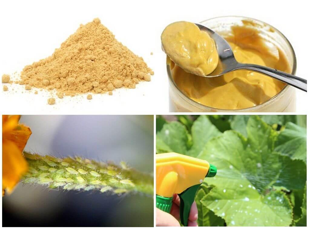 горчица для растений