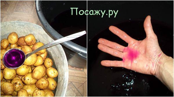 картошка в марганцовке