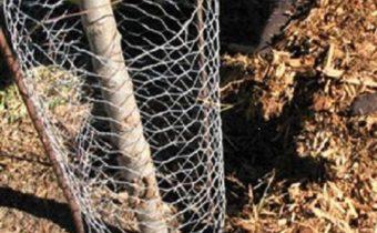 укрыть деревья