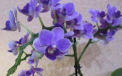 препарат нв-101 для орхидей